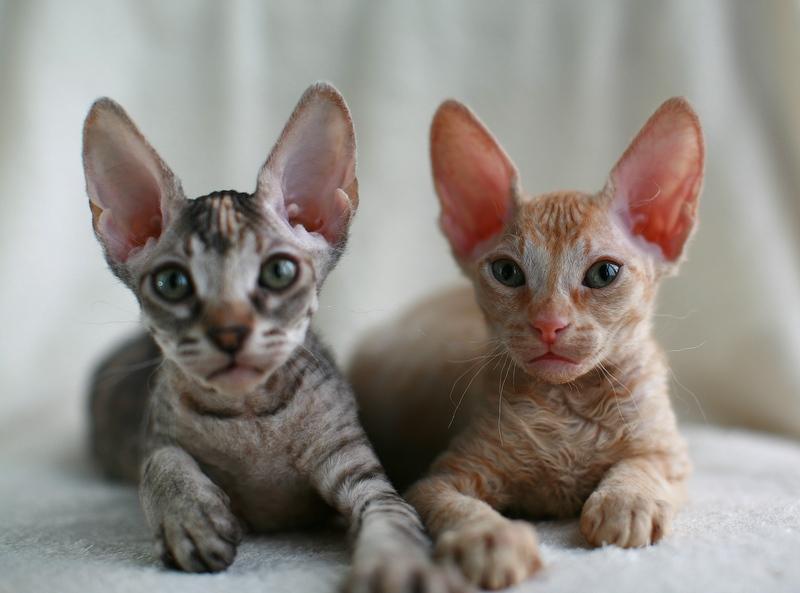 Бизнес на котятах