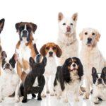 Разведение собак как выгодный бизнес