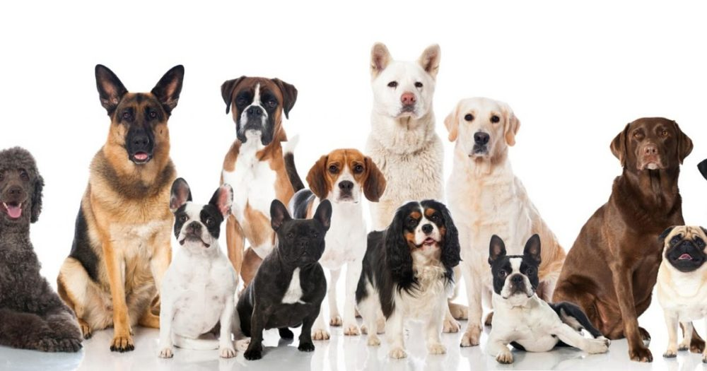 бизнес на щенках